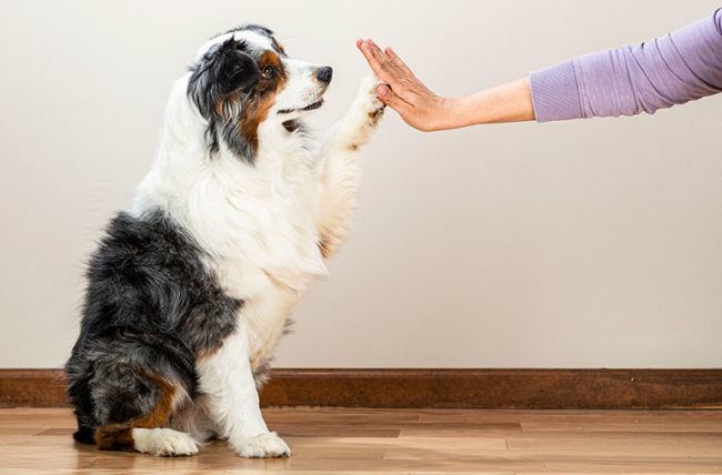 LMC_5392-dog-high-five-650x428